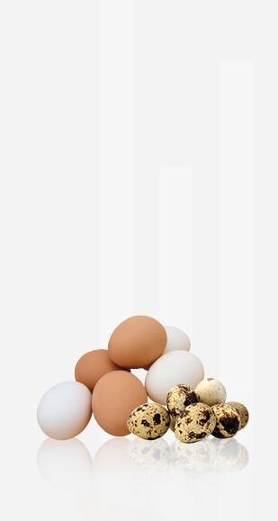 Trứng giá sỉ